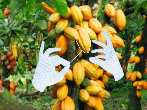 Cacao Sorcerer